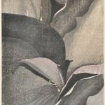 仲野壽志/NAKANO hisashi:カンナ6 73×53 木版