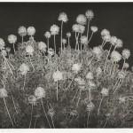 横瀬信子/YOKOSE nobuko:風の記憶-2014-1 65×85 銅版・メゾチント