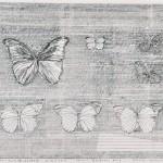 松下 忠/MATSUSHITA tadashi:オオムラサキとモルフォ蝶のある標本箱 55×73 ドローイング