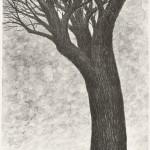 新井リコ/ARAI riko:樹の夢 52×39 平版