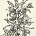 白石 幸子/SHIRAISHI sachiko:花のとおり道 |58×40 銅版
