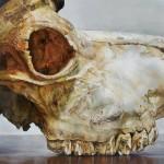 中台 ゆう子/NAKADAI yuko:頭蓋骨(Ⅰ) S100 油彩