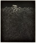 川井 一光 / KAWAI kazumitsu : 生生(Ⅱ) 55×45 銅版