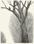 新井 リコ/ARAI riko:小鳥と樹 90×70 平版・リトグラフ・アルミ版