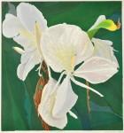 仲野 壽志/NAKANO hisashi:Ginger 63.5×59.5 木版