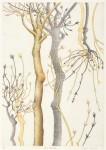 大口 淑美/OGUCHI kiyomi:枝を渡る風 40×28 銅版