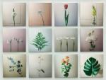 有吉 宏朗/ARIYOSHI hiroaki:植物観察 163×126.2 鉛筆・インク・透明水彩・アクリル