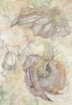 菅野 昌子/KANNO masako:クレマチスのドライフラワー 145.6×103 水彩・透明水彩・鉛筆