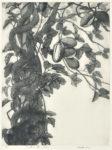 白崎 悦子/SHIRASAKI etsuko:大地の詩~アケビ 85×65 銅版